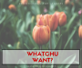 Devotionals For Leaders: WhatchuWant?